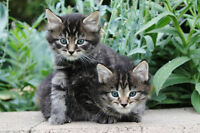 3 super sweet ,healthy kittens looking for  loving homes  !