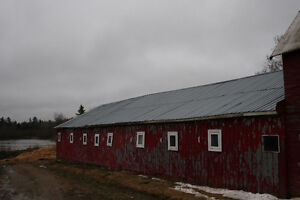 Rafters and Steel Roofing
