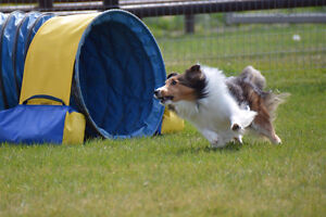 Agility Lessons in South Langley