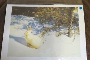 """Limited Edition Print - Claudio D'Angelo - """"Snowshoe Hare"""""""