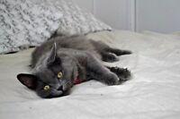 Free cat in NEW LISKEARD