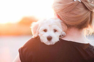 Become a pet sitter with Pawshake Peterborough Peterborough Area image 8