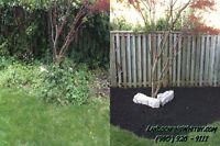 Spring Clean-Up - Gardening Services - Landscaper - Same Day