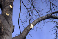 Tree Pruning And Property Maintenance