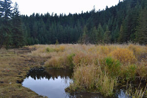 10 acres in Chimney Valley Williams Lake Cariboo Area image 9