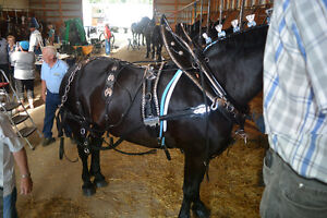 Heavy Horse Show Wagon, Cart and accessories. Moose Jaw Regina Area image 5