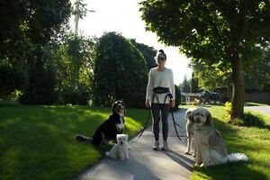 Professional and Reliable Pack Walks for Dogs Kitchener / Waterloo Kitchener Area image 7