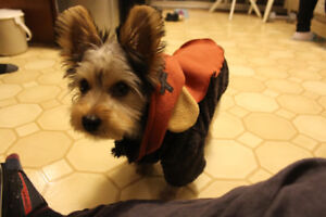 Looking for dog playdates for my 2 year old Yorkie