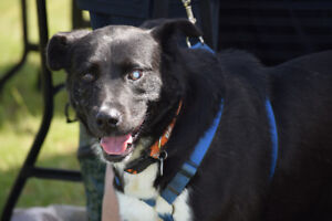 **Lightening - LAB cross is available for adoption***