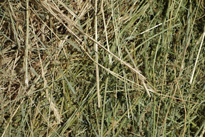 5 Round Bales Grass Mix Hay