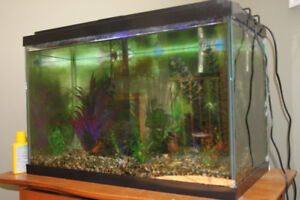 fish, tank and accessories