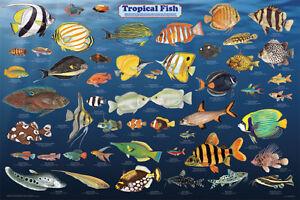 Wanted, fresh water Tropical fish, for an aquarium