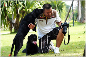 The Greatest Dog Care/Sitting Services Around You!