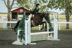 Beautiful, Experienced, Thoroughbred Jumper For Sale