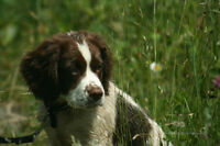 Boreal Dog Treks....Walking, Training and Behavioural Services