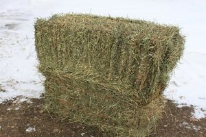 Hay for sale, small square bales.
