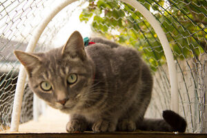 Cat enclosures and cat-proofing for your yard, balcony, or patio