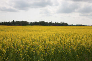1 Parcel of Farmland-Thorhild, AB-Unreserved Auction
