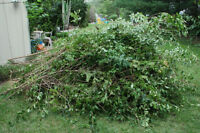 Brush and tree removal