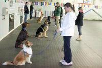 Group obedience/agility classes