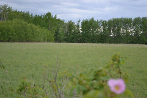 840042 RR233 - LAND 10 MIN TO PEACE RIVER OR GRIMSHAW -