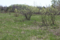 Cottage Lots in Blooming Point 4.99 Acres