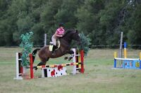 Indoor and outdoor horse boarding available - indoor arena