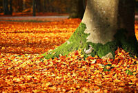 Fall Clean Up Services - Residential and Commercial