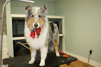NATURAPETS GROOMING.  Special $10 off 1ST Groom!
