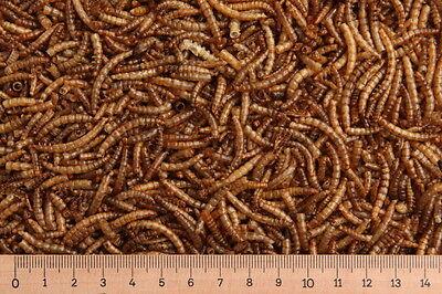 1 kg Mehlwürmer getrocknet, Reptilienfutter, Nagerfutter, Vogelfutter, Zierfisch