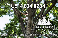 - TREE REMOVAL SERVICES - WEST ISLAND