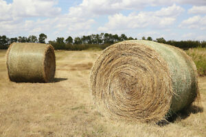 2016 ROUND HAY BALES FOR SALE