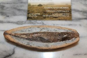 Authentic Fish Fossil