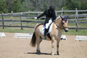 Beechwood Equine: Riding lessons, training, and equine massage