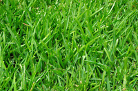 SIMPLE LAWN CUTTING SERVICES