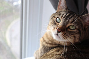 Need a Cat Sitter? – Call West Island Cats
