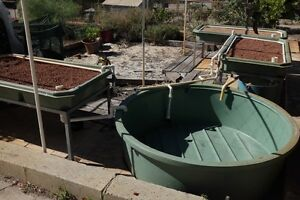 Aquaponics - 2000L Tank and Three Grow Beds Pinjarra Murray Area Preview