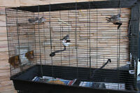 6 ZEBRA FINCHES AND CAGE FOR SALE THIS SUNDAY ONLY