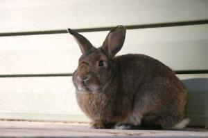 Rabbit to good home