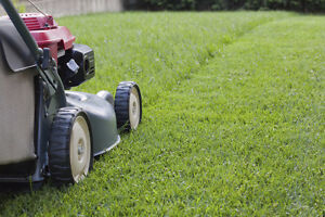 Fall Lawn Cleanups, Lawn Maintenance, Landscaping Cambridge Kitchener Area image 3