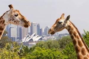 Taronga Zoo Ticket Pass Voucher Sydney City Inner Sydney Preview