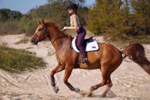 Part board opportunity available for confident rider