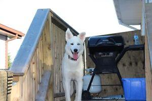 ANIMALS ARE AWESOME-- DOG TRAINING-- Kingston Kingston Area image 6