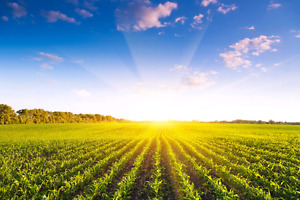 Wanted farmland for rent/lease