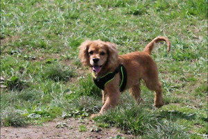 Personalized individual dog walking service Vancouver area