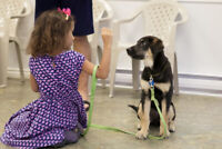 Train & Socialize Your Puppy With ACTT Classes