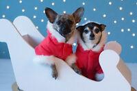 Seasonal pet photo sessions/Nanaimo pet photography