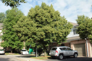 Beautiful 3 bedroom Town house in Dundas for a year lease.