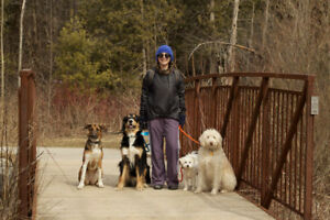 Pack Walks - Now Welcoming New Clients