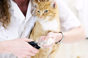Service de coupe de griffe à domicile pour CHAT